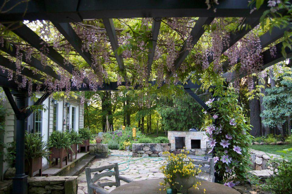 wisteria pergola 2
