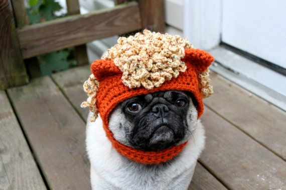 My Little Pony Macaroni Hat Dog Lion Hat Cute Pugs Pugs