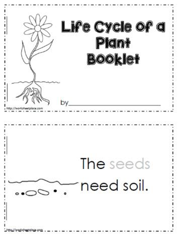 Life Cycle of a Plant   Plant life cycle, Plant life cycle ...