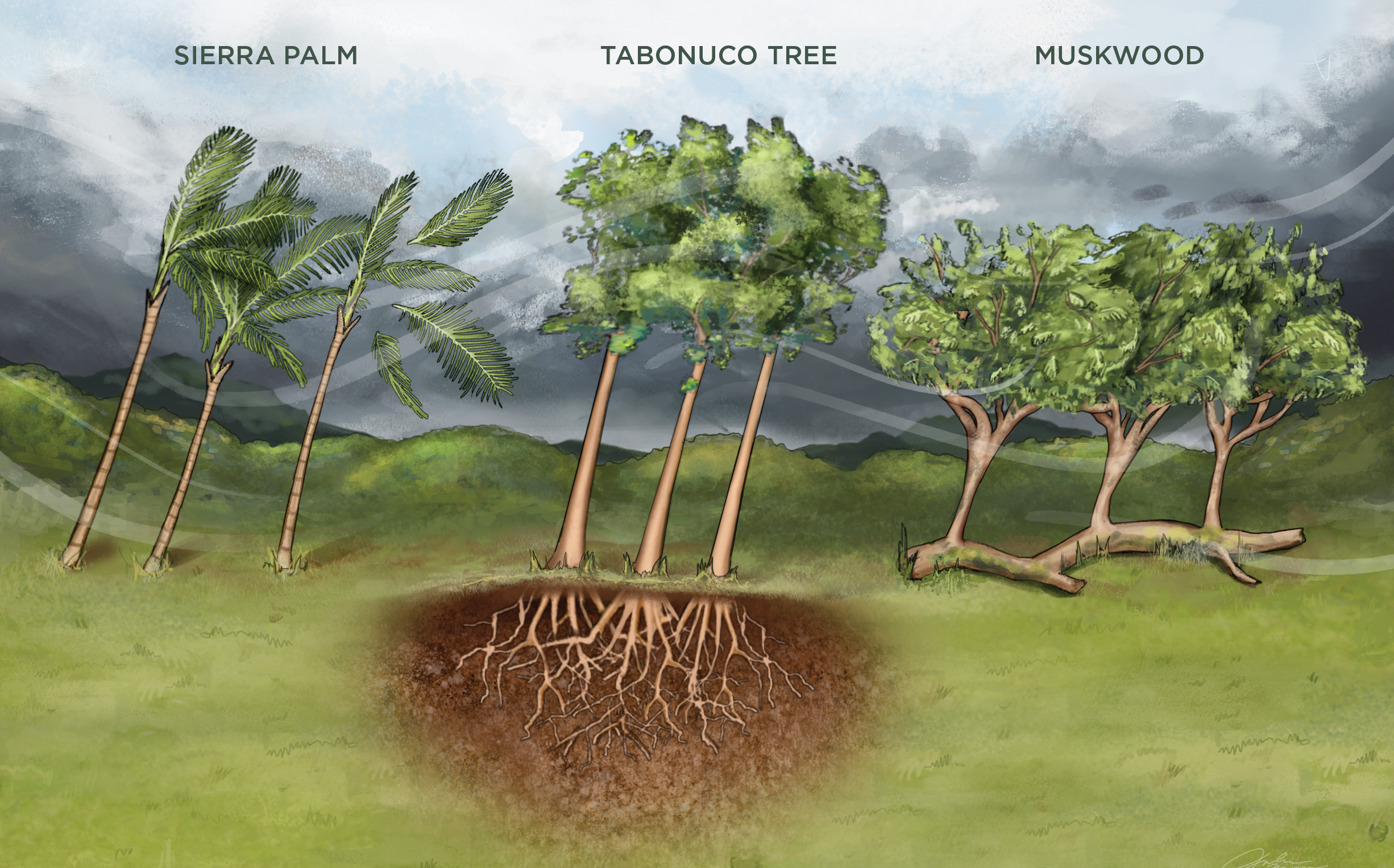 Infographic How Forests Survive the Storm The Scientist