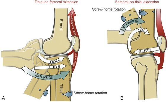 Knee Extension Arthrokinematics At The Tibiofemoral Joint