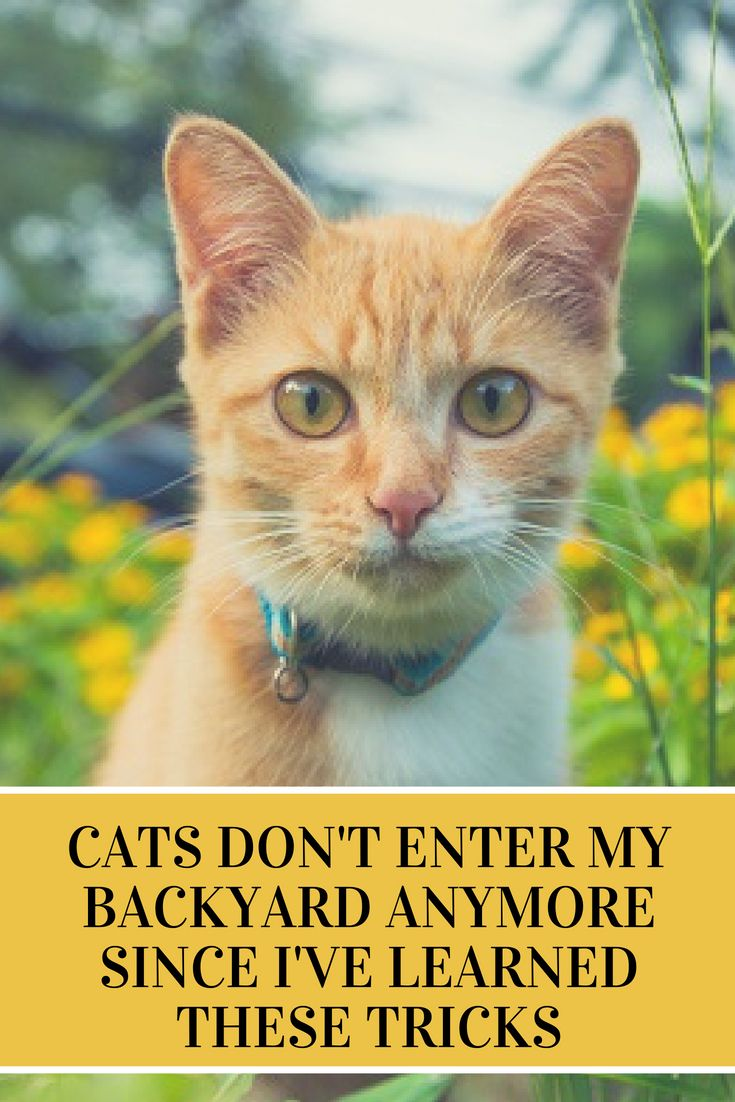Cats don't enter my backyard anymore since I've learned ...