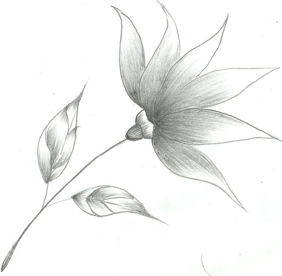 Flower Sketch By Mubibuddy On Deviantart Flower Sketch Pencil Pencil Drawings Of Flowers Flower Sketches