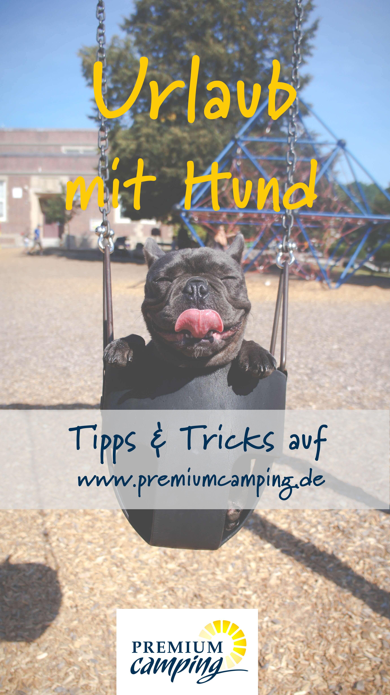 Urlaub Mit Hund Katze Maus Campingplatze Unterkunfte Tipps Urlaub Mit Hund Ferien Mit Hund Urlaub