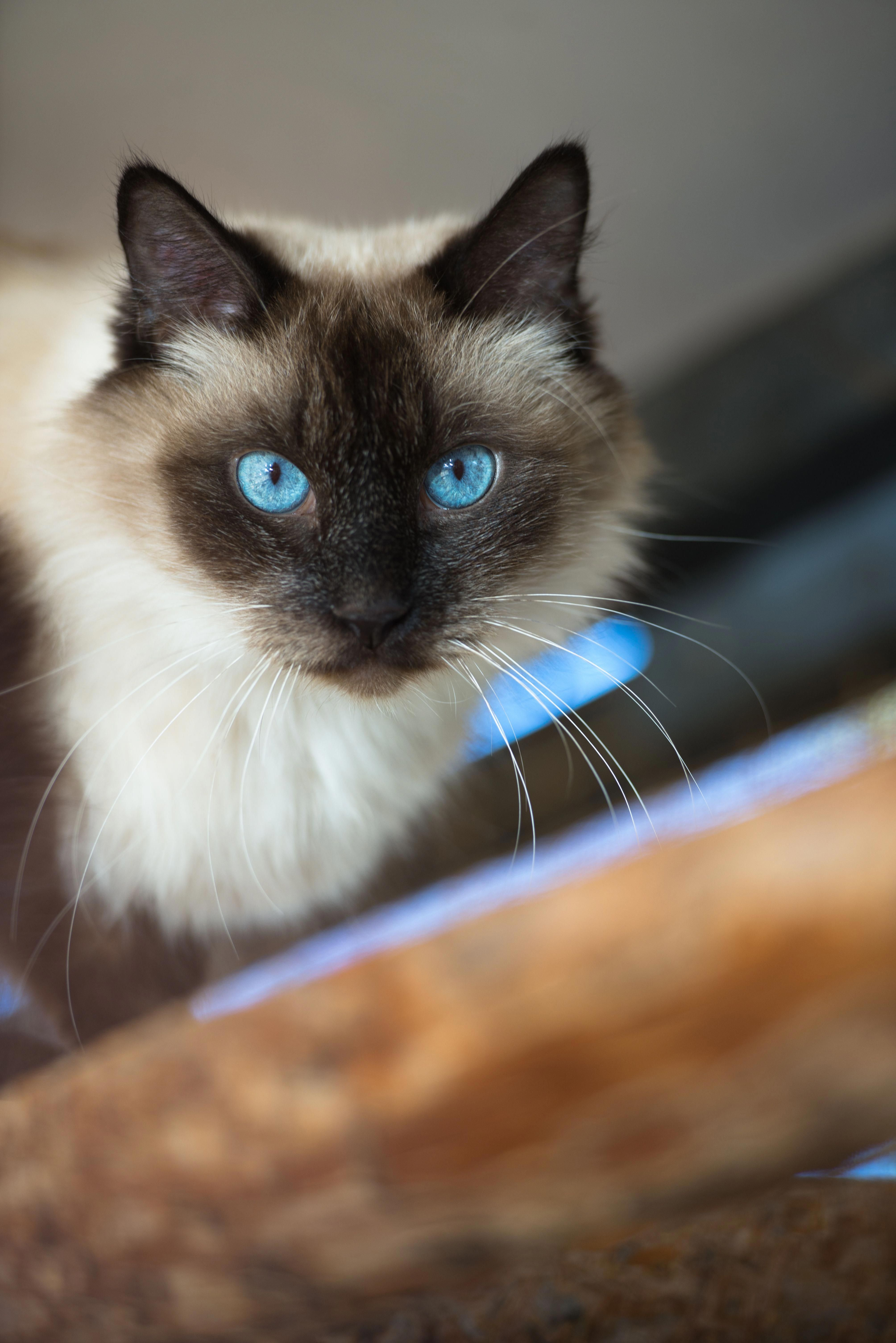 Cats With Down Syndrome Cat photography, Down syndrome