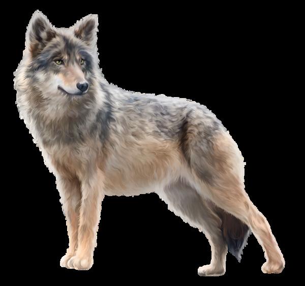 волк, животные | Животные, Рисунки животных, Волк