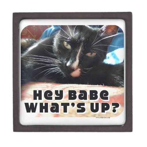 Hey Babe what's up? Can you do me a favor there's beer in the fridge and while you are in there can you make me a sandwich. Thanks.  Funny Flirty Cat Premium Gift Box