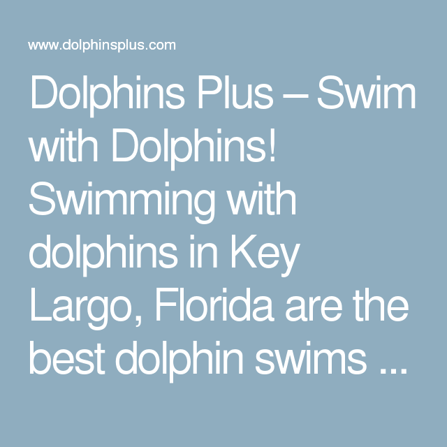Largo Town Center: Swim With Dolphins! Swimming With Dolphins