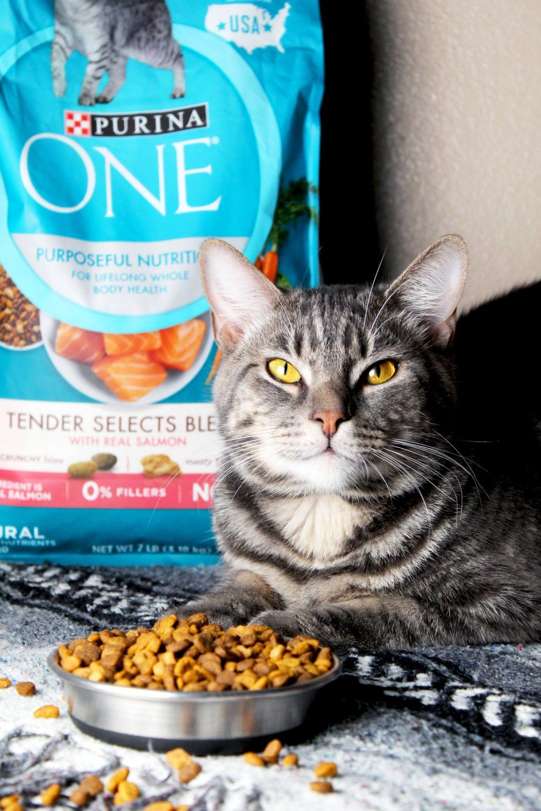 liquid cat food for cats with no teeth