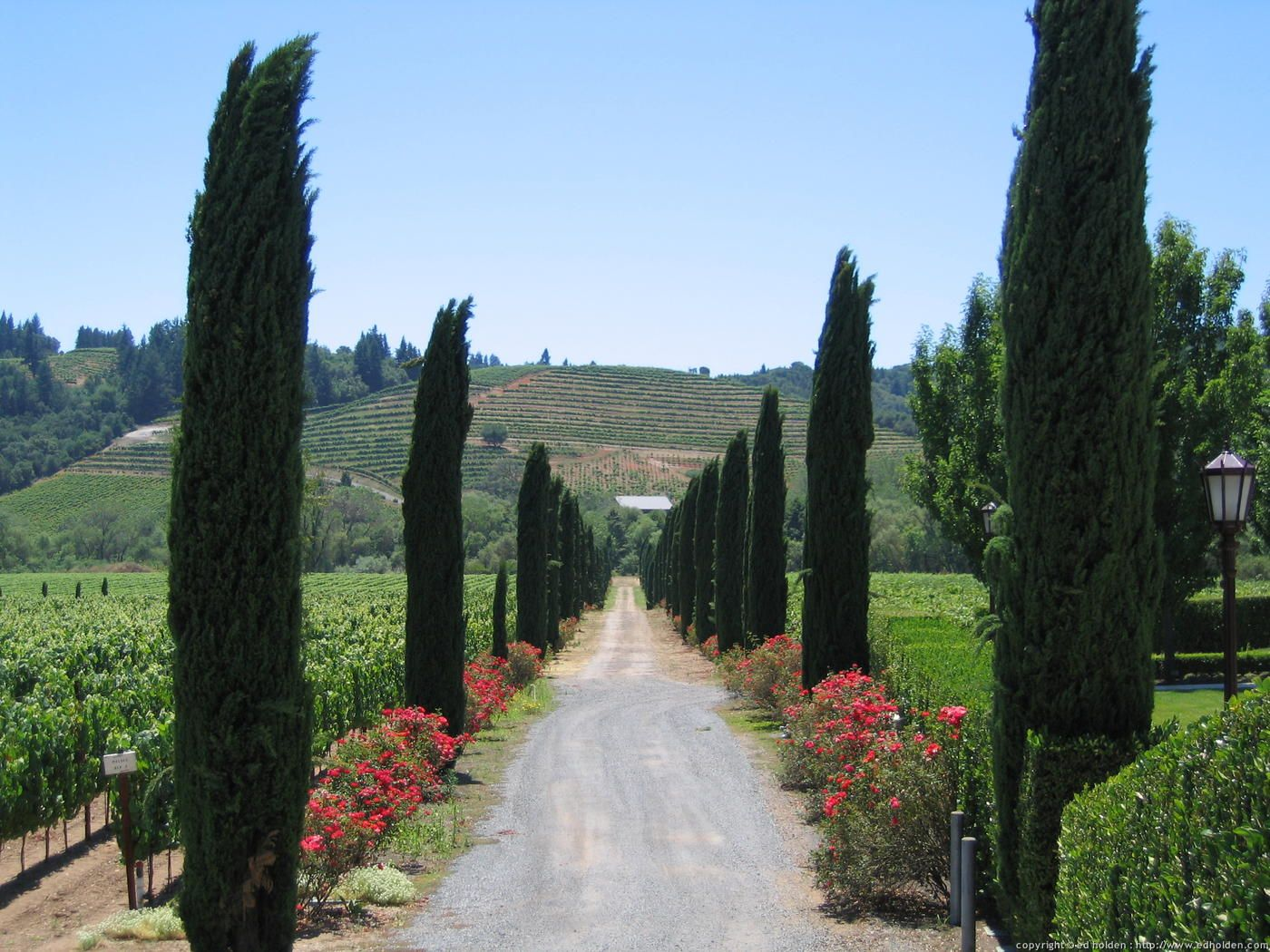 ferrari-carano vineyard and winery, sonoma county, california.