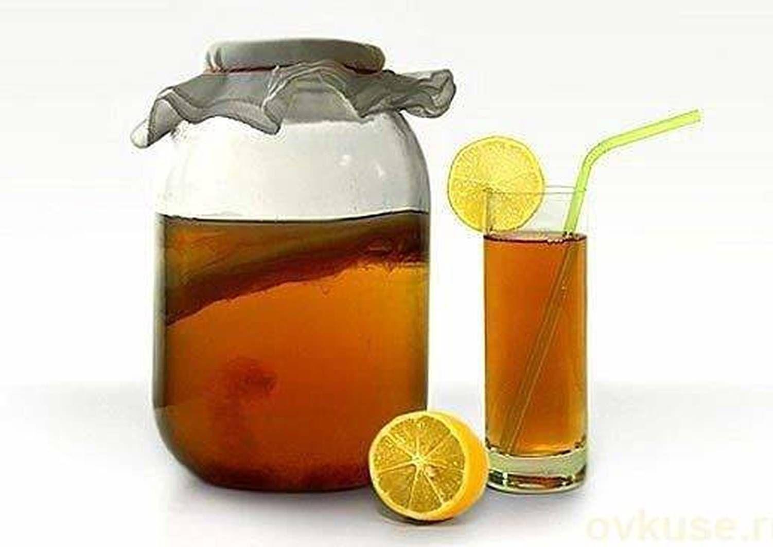 как получить чайный гриб в домашних условиях