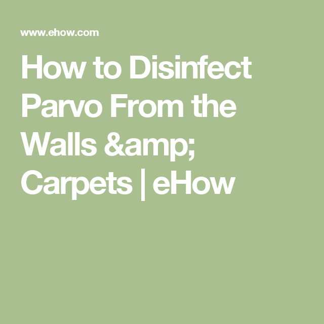 How To Disinfect Parvo From The Walls Amp Carpets Ehow Parvo Wall Carpet Disinfect