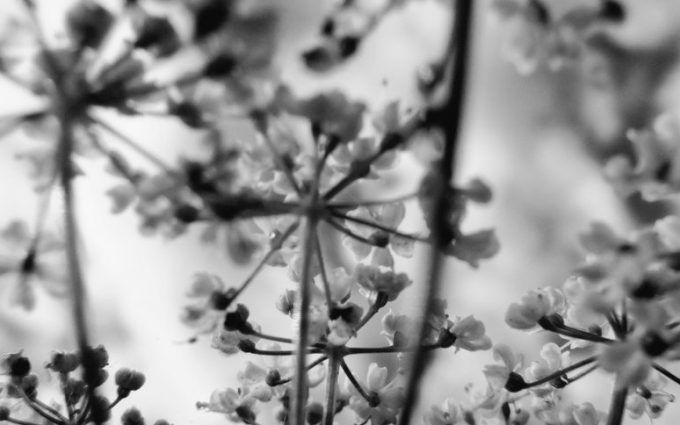 flores preto e branco fotografia (4)