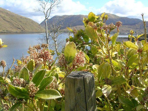 Leenane, Ireland - Co Connemara - Killary Bay - The view from my Grandma's Cottage