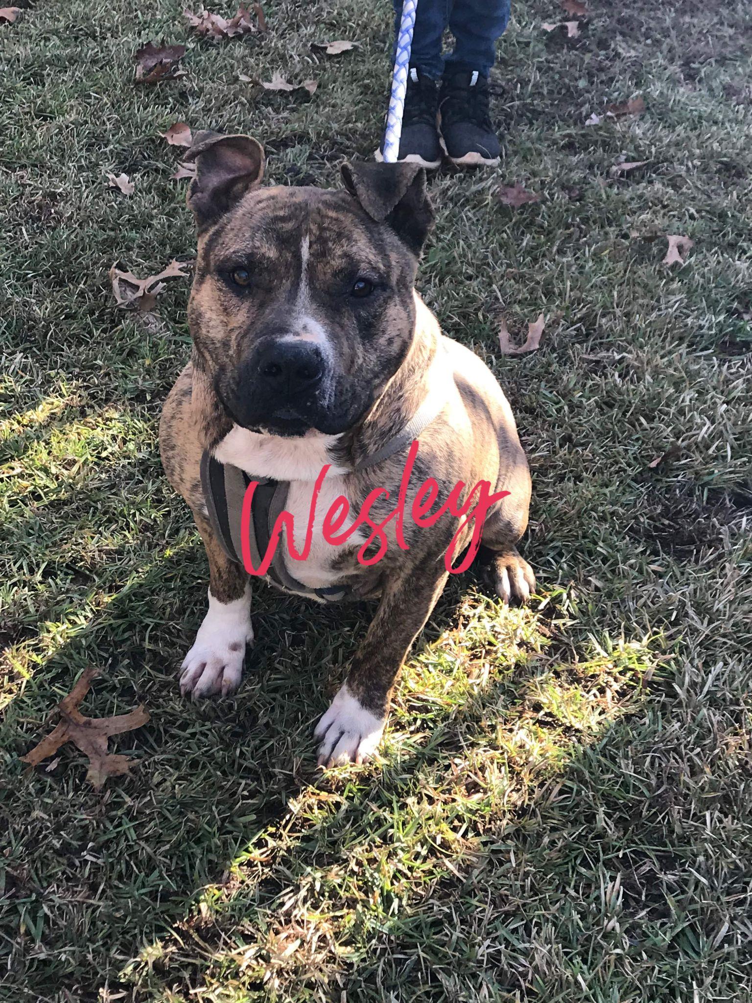 Adopt Wesley on Animals, Pet adoption, Animal rescue