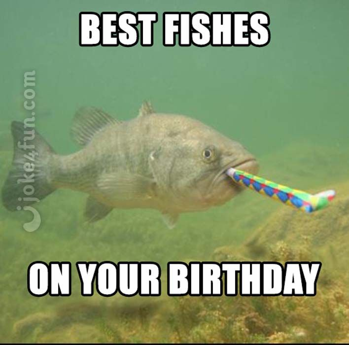 Image result for funny fish meme | Funny fishing memes, Fishing memes,  Happy birthday fishing