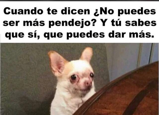 Memesespanol Chistes Humor Memes Risas Videos Argentina Memesespana Colombia Rock Memes Love Viral Bogota Mexi Memes Blackpink Memes Funny Memes