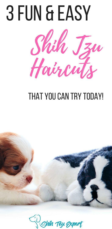 Shih tzu haircut styles shih tzu haircuts   fun and easy styles for your shih tzu  teddy