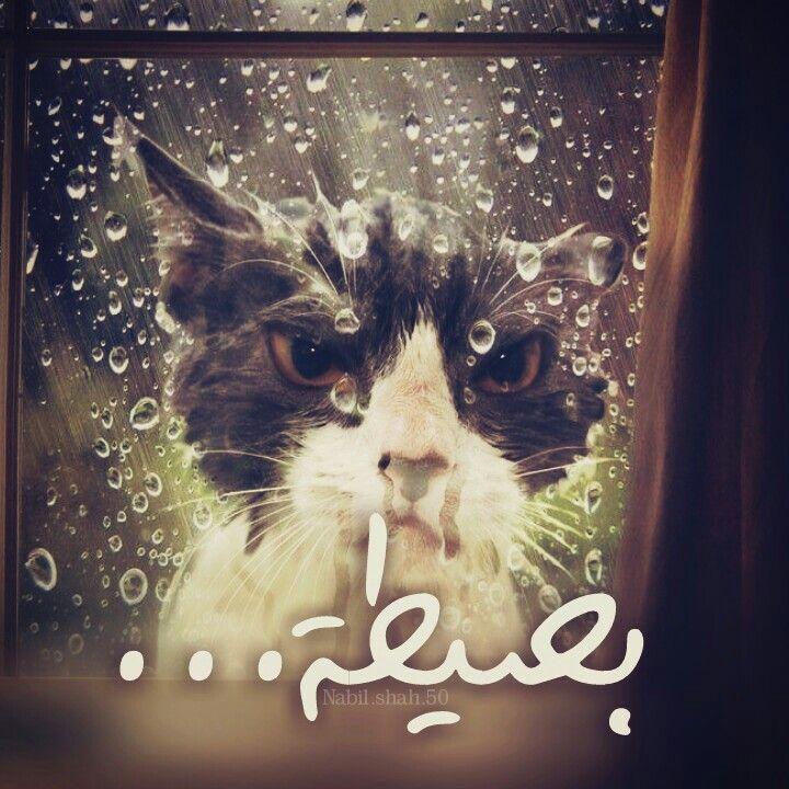 بسيطة بسيطة قط قطة غضب مطر نافذة شباك تصميم تصميمي تصاميم كلام كلمات Nabil Shah انستا انستغرام انستقرام انستغرامي