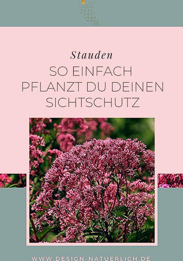 Photo of Sichtschutz pflanzen mit Stauden und Gräsern – Stilvolles Design – einfach gepflanzt