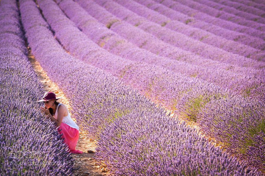 Scent of Purple by ronnybas. Please Like http://fb.me/go4photos and Follow @go4fotos Thank You. :-)