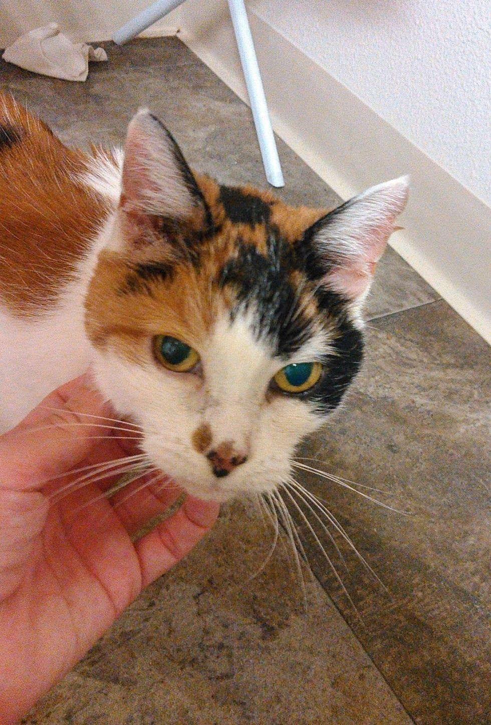 Couple Takes Two 21 Year Old Bonded Cats Out Of Shelter So They Can Spend Their Golden Years In A Loving Home Cats Senior Cat 21 Years Old