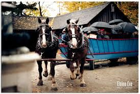 Horse & Wagon for guest transport