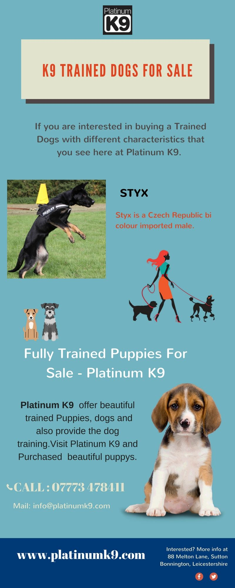 Contact Platinum K9 Our Trained Puppies For Sale At An Moderate