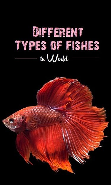 40 Different Types Of Fish Species In World And Their Facts Types Of Fish Fish Betta Fish