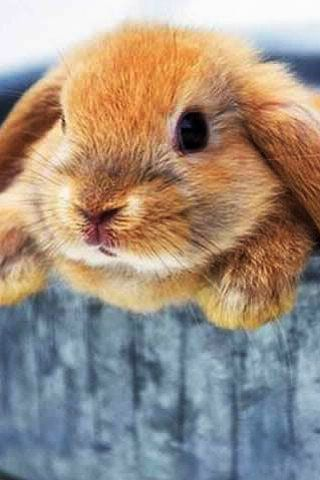 such a cute bunny!!!
