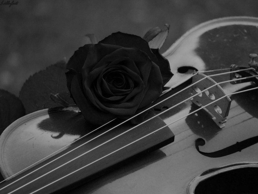 Rosas Negra Roses Violin Rose Wallpaper Rose