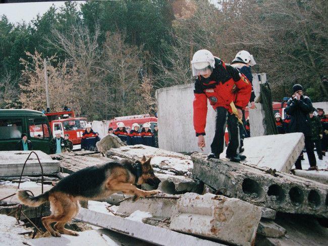 German Shepherd Rescue - 24 Pictures