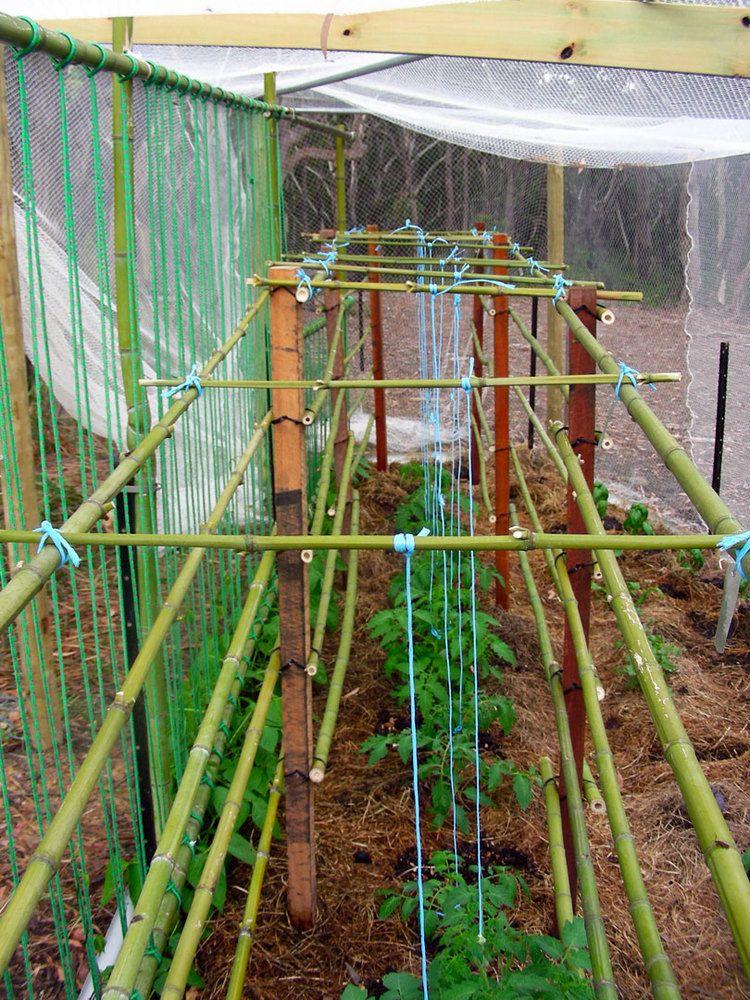 bamboo garden stakes. How To Frugally Build A Bamboo Garden Trellis Stakes
