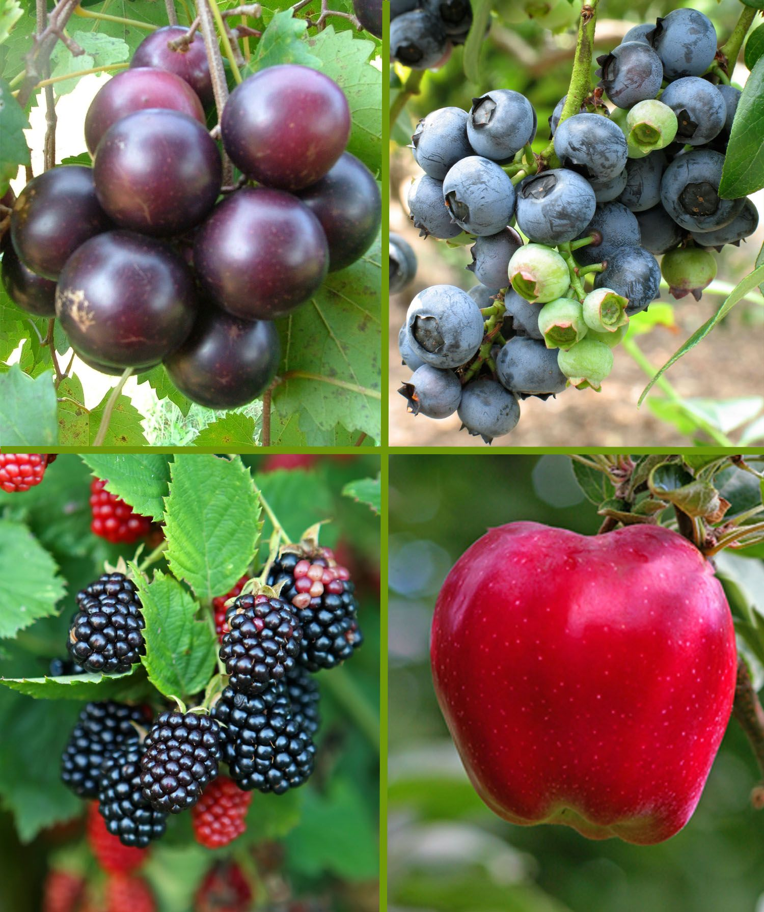 Time To Plant Offering Over 200 Varieties Of Fruit Nut Trees Berry Plants