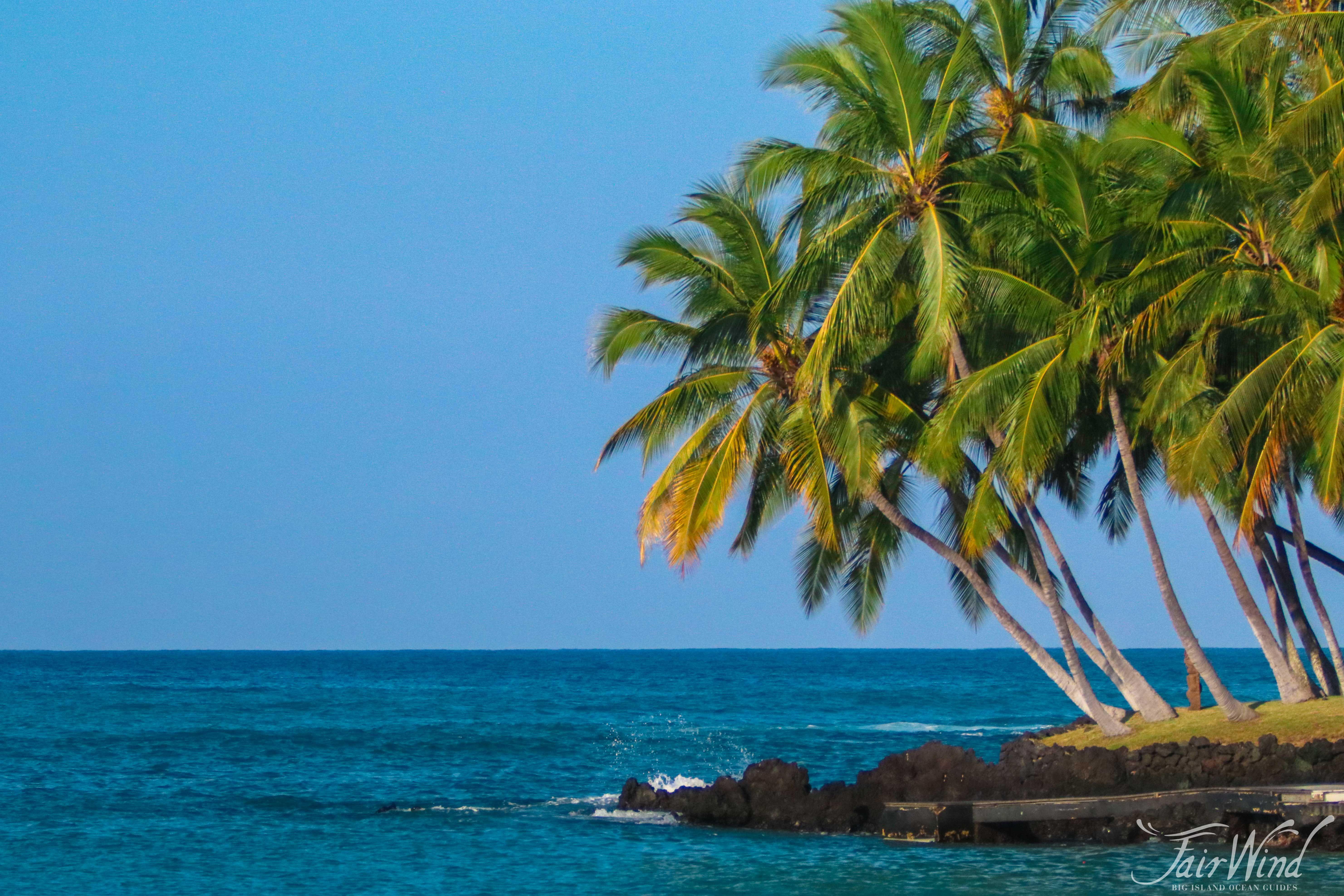 Snorkel Kona - Kealakekua Bay Hawaii - Fair Wind Cruises