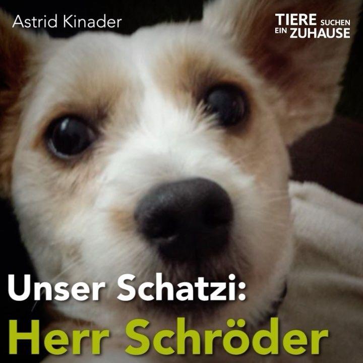 Gefallt 1 338 Mal 21 Kommentare Tiere Suchen Ein Zuhause Tieresucheneinzuhause Auf Instagram Tierschutzgeschichten Die Happy Ends Eure Animals Dogs