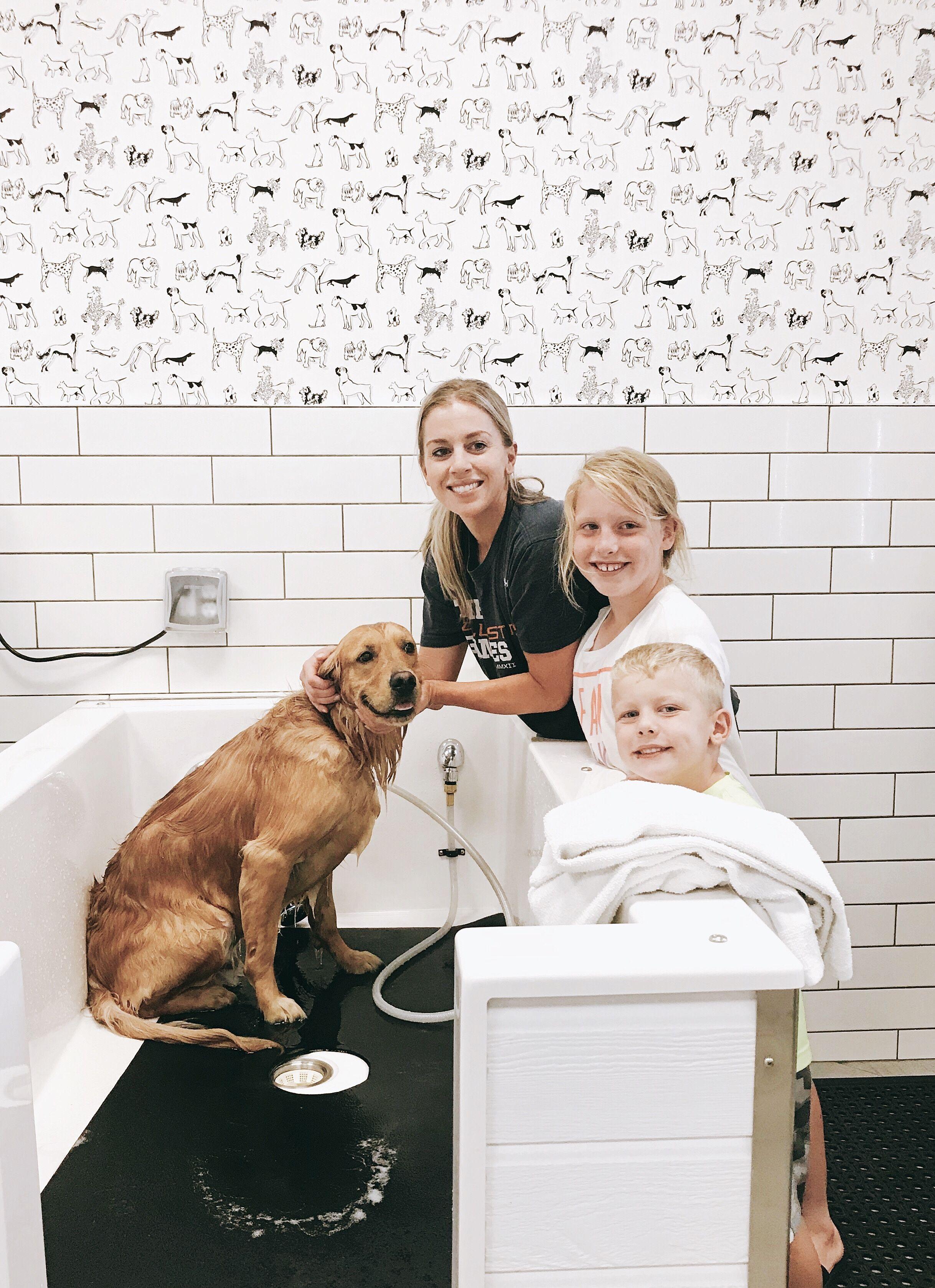 Self Service Dog Wash Service Dogs Dog Wash Dog Business