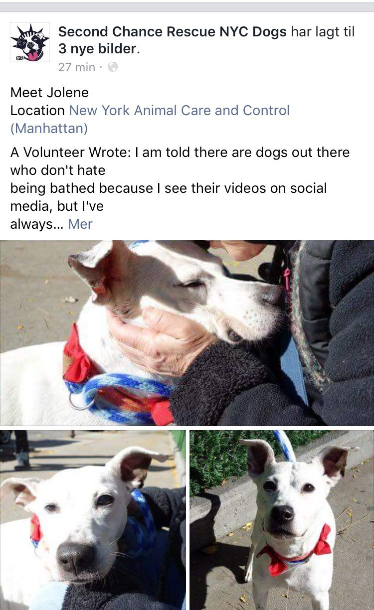 Pin By Sylvie Costes On New York Adopt Foster Sponsor Me Dogs Pet Adoption Animal Shelter
