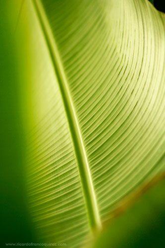 Leaf plant.  Una bella estampa de la naturaleza