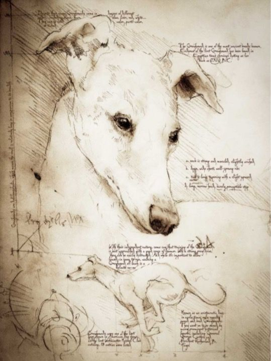 Pin By Teresa Glover On Whippets Greyhound Art Dog Paintings Dog Art