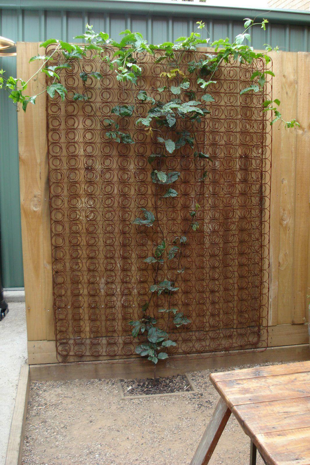 Clinging And Creeping Courtyard Garden Bed Springs Garden Design