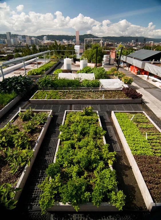 Weekend Getaways 72 Hours in Portland, Oregon – Roof garden design