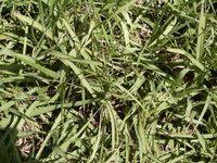 Grass Info for Orlando