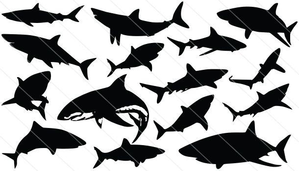 Shark Silhouette Vector Shark Silhouette Silhouette Vector Fish Silhouette