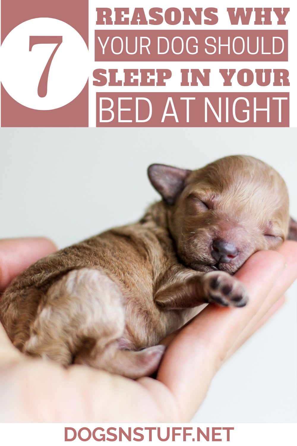 7 Amazing Reasons Why Your Dog Should Sleep In Your Bed At Night   Your dog,  Sleeping dogs, Dogs