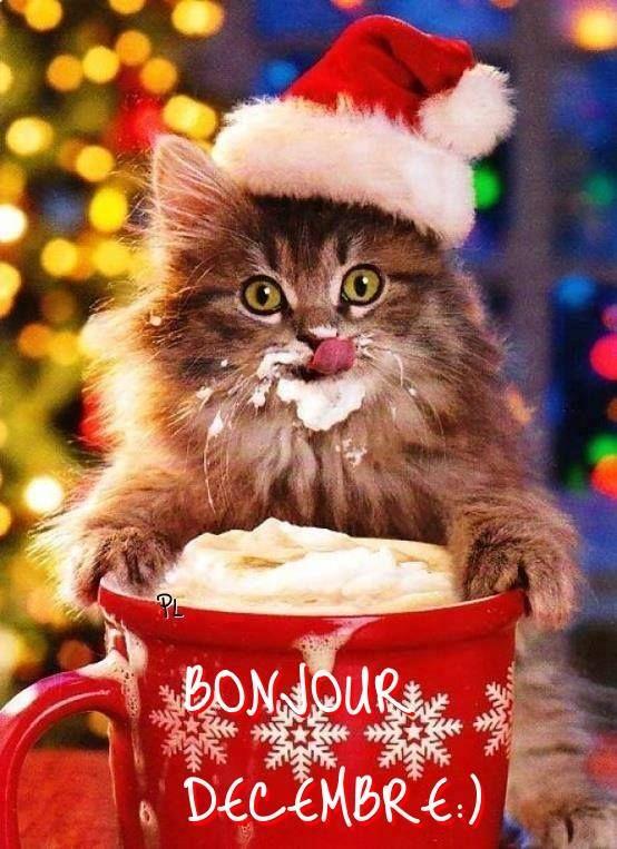 Décembre #bonjourdecembre