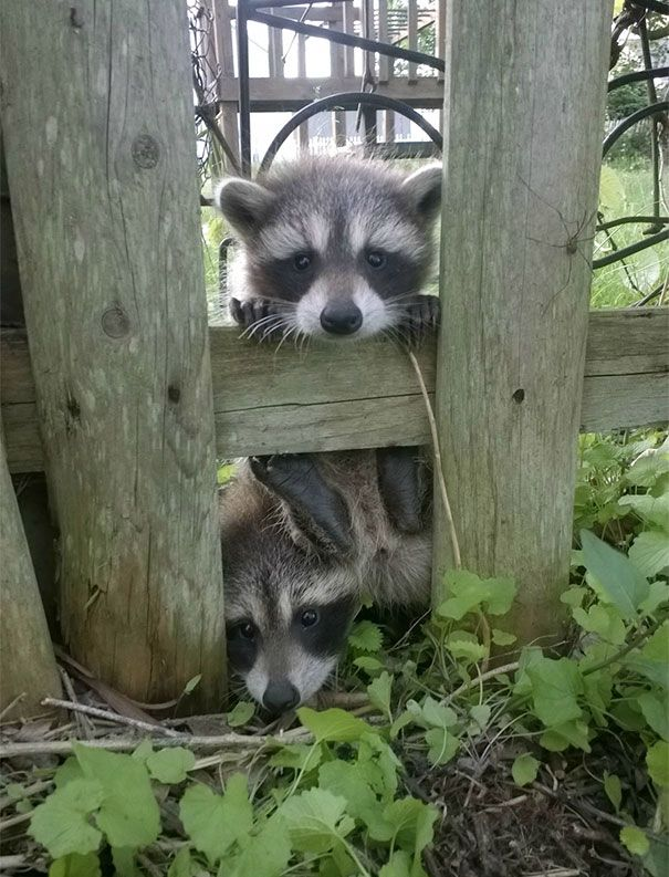 Hello! So you're our new Neighbor? ... Have you some chips?