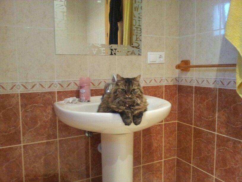 Chispa en el baño...