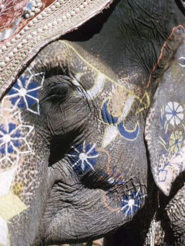 Close-Up of Elephant Decorated with Paint in India Photographic Print at Art.com