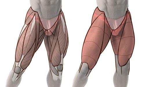 Leg muscles.